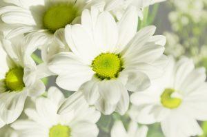 margherita fiori matrimonio primavera