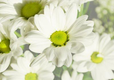 margherita-fiori-matrimonio-bucolico