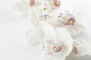 fiori matrimonio orchidee